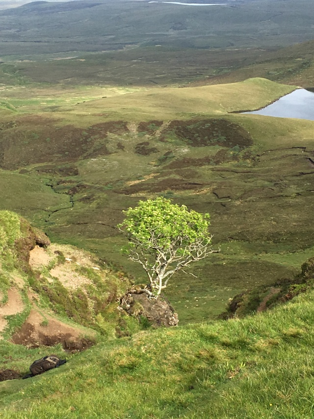 The only tree on Skye.jpg