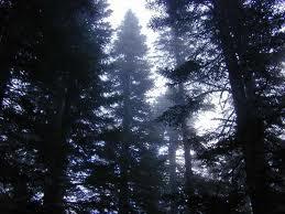 sunlit forest.jpg